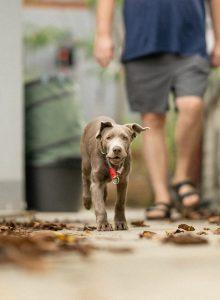 Stockers Dorfhotel Hund