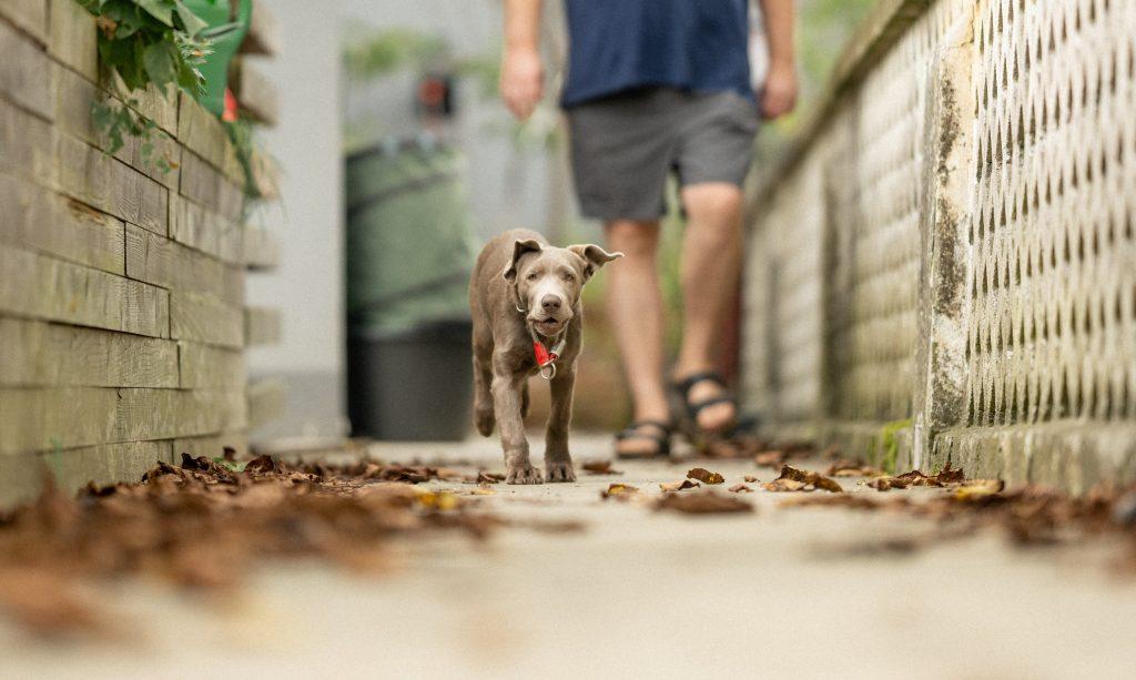 Urlaub mit Hund in Deutsch Goritz